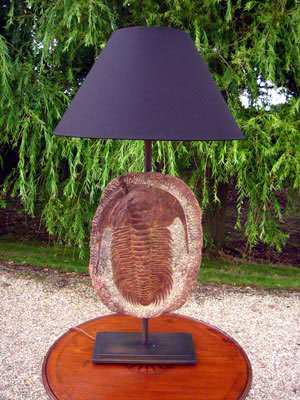 Picture of Trilobite fossil lamp