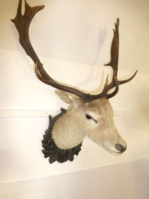 Picture of Stag head