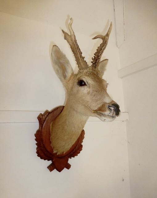 Picture of Head of a Row Deer